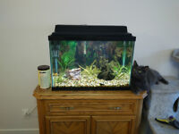 Aquarium Tetra 20 gallons COMPLET