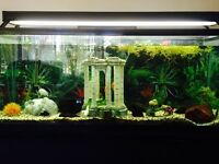 55 GALLON FISH TANK WITH STAND AND FISH