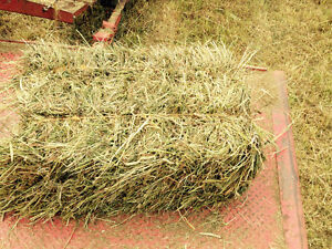 Booking orders for horse hay