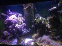 Marine reef close down!