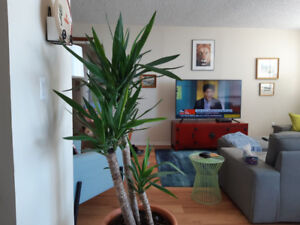 Downtown 2  Bedroom Kingston Apartment with Water View