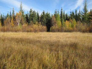 160 acres of bare land in Wandering River