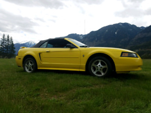 Yellow 2002 Mustang Convertible - Low Kilometers!
