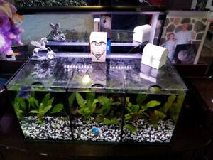 Aquarium Betta 3 compartiment