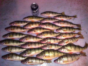 Attention Perch Fishermen, Lakefront Beach House Rates Reduced!