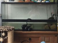 2terrapins and 3ft tank