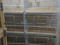 Wire Budgie Quail Teetar Breeder bird Cage large