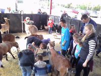 Mini Mobile Travelling Petting Zoo with Pony Ride for 12 kids