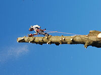 Tree service & Arborist Look Here First!