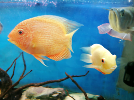 Fish tank tropical fish
