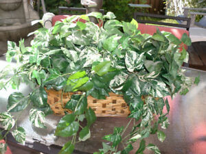 Artificial decorative plant. Basket holding plant is 19 inches -