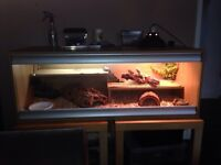 £110 If gone today!!! Bearded dragon with full setup