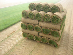 Farm fresh Kentucky blue grass skid 289 720 sq ft delivered