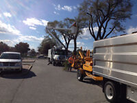 Tree Removals and Trimming 519-990-1627