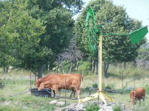 Looking to rent a bull