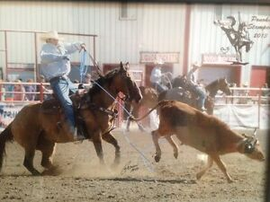 Team roping horse training and private lessons