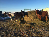WANTED LARGE ROUND BALES 4 HORSES NEAR SASKATOON!!