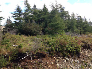 Commercial Land for Sale in Bay Roberts on Beaver Pond!!! St. John's Newfoundland image 3