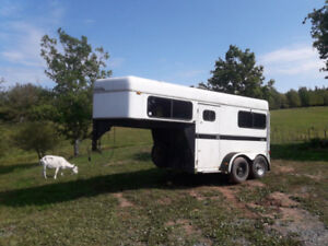 2 horse straight load horse trailer