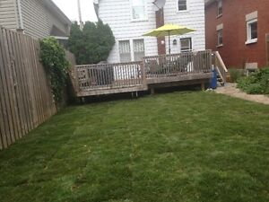 lawn damage London Ontario image 10