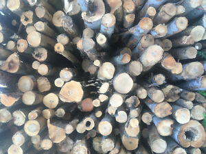 Firewood logs or cut and split