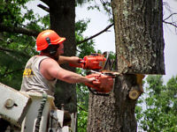 Do you need Any Tree Removal Expert