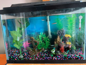 20 GALLON FISH TANK, FISH & ACCESSORIES !