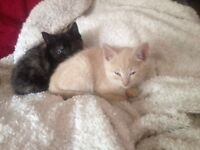 Stunning kittens looking for a forever home