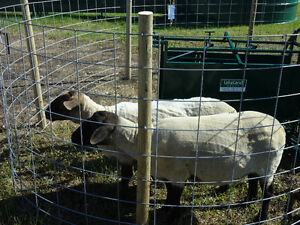 WELDED WIRE MESH PANELS for CATTLE/SHEEP/GOATS/HOGS/CHICKENS ETC Regina Regina Area image 1