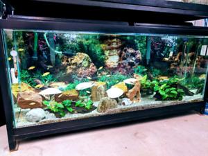 Aquarium 55 gal