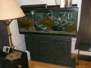 55 gallon tank with stand