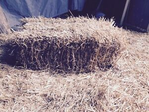 Straw -Small Bales Cambridge Kitchener Area image 1