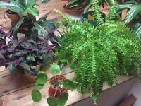 Massive indoor plant sale!