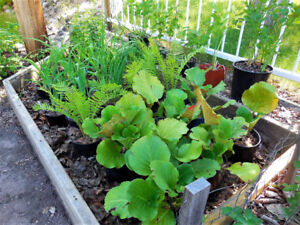 Perennial Plants in Pots - ready to plant.