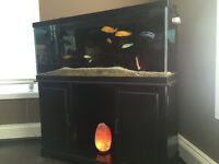 75 Gallon Aquarium with Everything included - GREAT DEAL