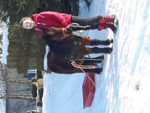 13 year old kids pony mare for sale
