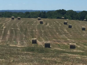 2018 Hay For Sale