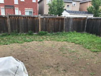 Need someone to pull weeds and sodding for my backyard ASAP