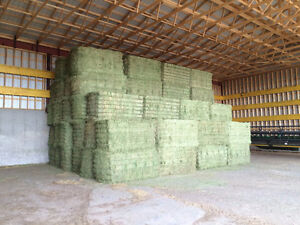 first cut hay in   shed