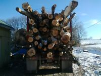 Firewood Logs for Sale Dump Delivery