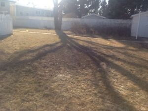 Anytime Tree Removal Moose Jaw Regina Area image 3