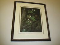 LIMITED EDITION SIGNED PRINT BY PIERRIE STUART BROWN SQUIRREL