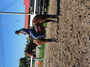 Actively looking for a part board or lease for my 2 mares Peterborough Peterborough Area image 6