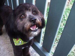 Professional grooming in your dog's home