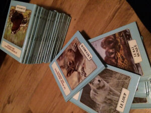 Collection livre animaux
