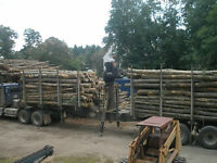 Wanted - Firewood Logs 10' or longer - Pickup or Delivery