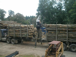 Firewood Logs or 16 inch rounds - Pickup or Delivery