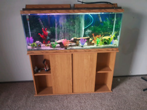 GORGEOUS 55-60 GALLON CICHLID SET UP