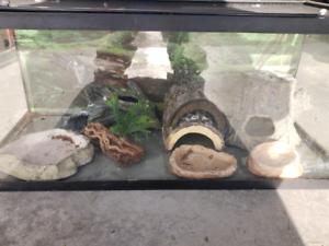 Reptile aquarium with accessories