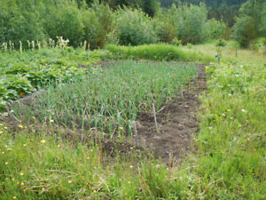 45 acre Hobby Farm For Sale in the Nass Valley